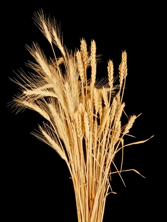 wisp of wheat and rye Stock Photo - 23144568