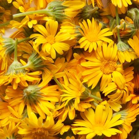 marigold: marigold, background Stock Photo