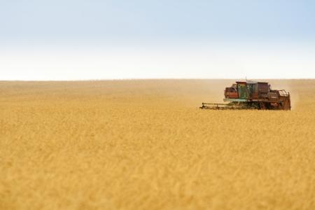 cosechadora: cosechadora de cereales combinan el trabajo en el campo
