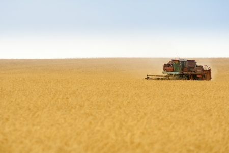 combine harvester: grain harvester combine work in field