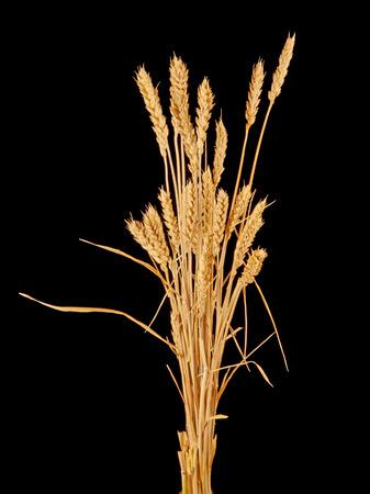 wisp of wheat photo
