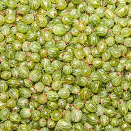 grosella: grosella verde, fondo