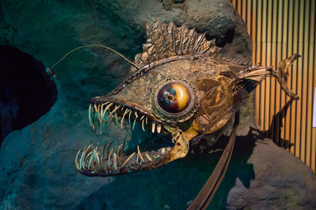stuffed fish: angler fish, dummy