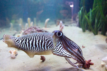 quid, squid