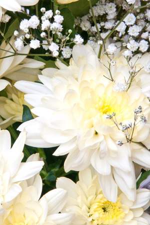 pestil: white chrysanthemums