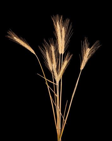 rye isolated on black photo