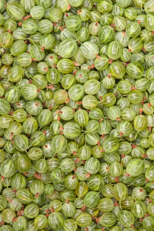 gooseberry: green gooseberry, background