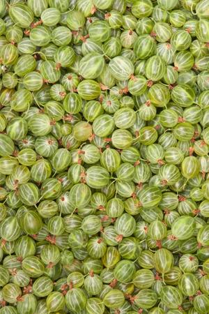 grosella: grosella espinosa verde, fondo