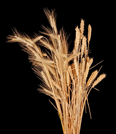 wisp: wisp of wheat and rye