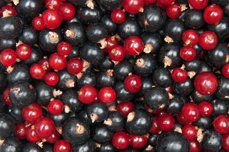blackcurrant: mix of redcurrant and  blackcurrant