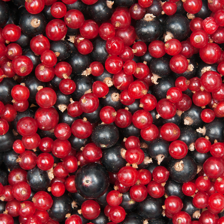 redcurrant: mix of redcurrant and  blackcurrant