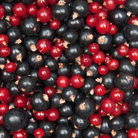 ribes: mix of redcurrant and  blackcurrant