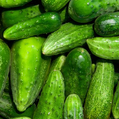 green cucumbers, background Standard-Bild