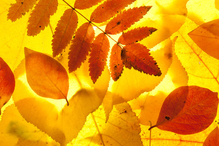 yellow and red leaves background
