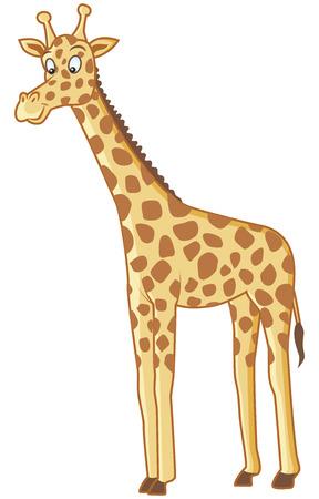 animales salvajes: ilustraci�n vectorial adorable de la jirafa divertida en el fondo aislado Vectores