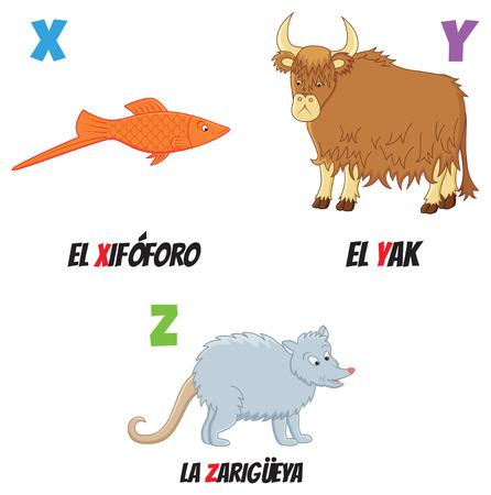 possum: spanish abc with different animals: yak, fish and possum Illustration