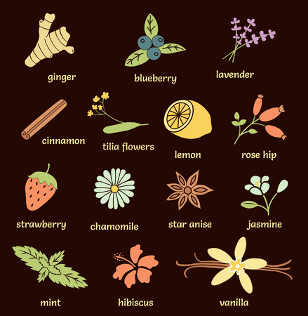 vanilla bean: vector set of herbs and spices: ginger, blueberry, lavender, cinnamon stick, tilia flowers, lemon, lavender, rose hip, strawberry, chamomile, star anise, jasmine, mint, hibiscus, vanilla bean