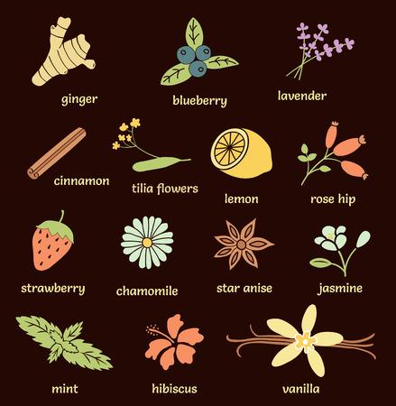 tilia: vector set of herbs and spices: ginger, blueberry, lavender, cinnamon stick, tilia flowers, lemon, lavender, rose hip, strawberry, chamomile, star anise, jasmine, mint, hibiscus, vanilla bean