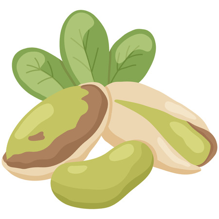 pistachio: vector illustration of pistachio nut on isolated background