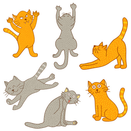 set of cats in different poses on isolated background