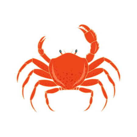 vector illustration of a crab on isolated background