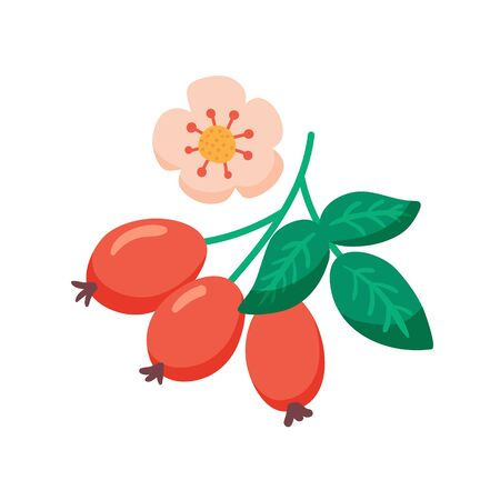 vector illustration of rosehip berries and flower