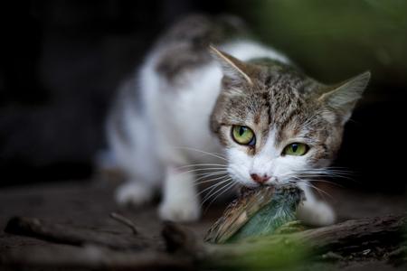 atrapar: Gato con el ret�n