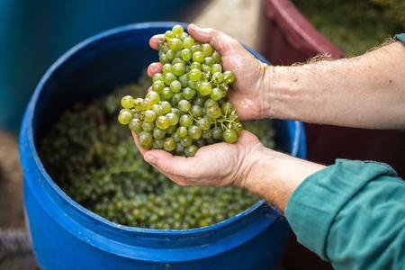 winemaker: Slovakia winemaker