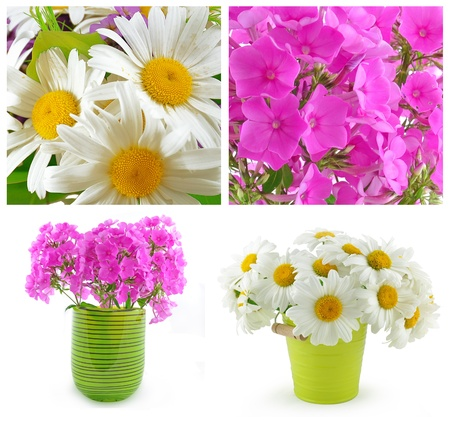 Green Vase with pink phloxes and a green bucket with white camomiles  Stock Photo