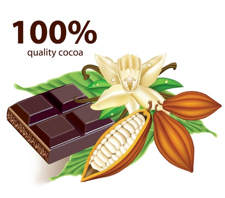 cocoa bean: Chocolate vanilla flower and fruit of the cocoa  Illustration