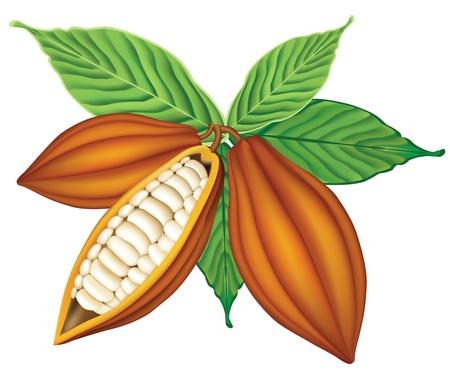 cacao: Cacao en grano con hojas verdes.