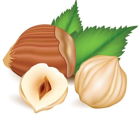hazelnut: Hazelnuts with leaves.