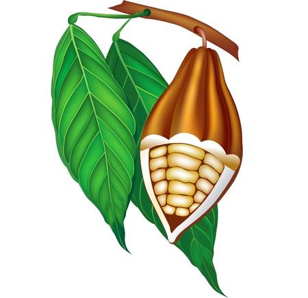 Los granos de cacao con hojas verdes.