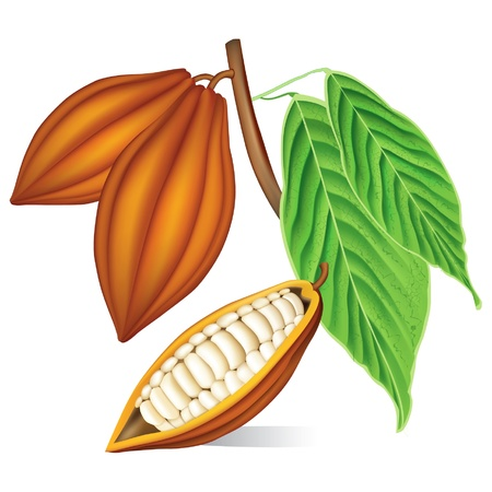 husk: Cocoa beans with green leaves.