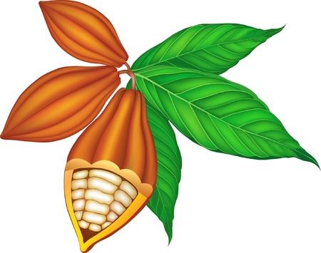cacao beans: Los granos de cacao con hojas verdes.