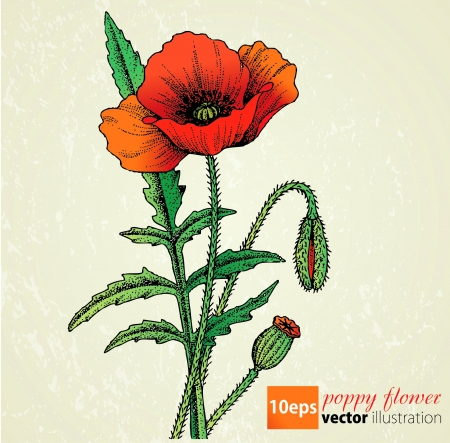 Poppy flowers retro Vector
