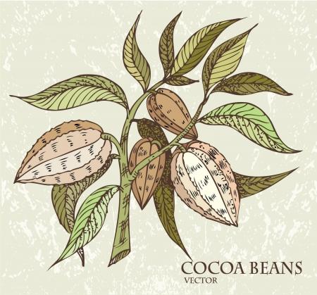 펄프: 녹색 잎 코코아 콩 일러스트