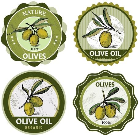 foglie ulivo: Olive raccolta etichette isolato su sfondo bianco Vettoriali