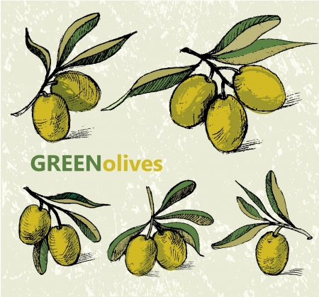 oil crops: hand drawn olive branches Illustration
