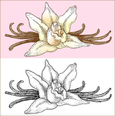 pod: vanilla flowers