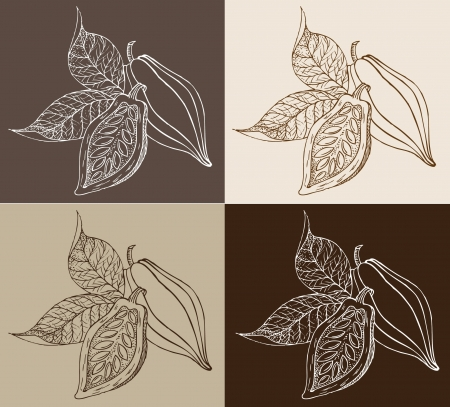 cacao beans: granos de cacao Vectores