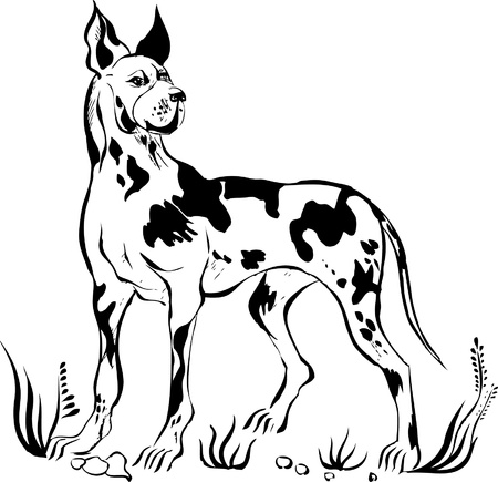 stafford: german mastiff