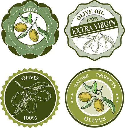 aceite de oliva virgen extra: Aceitunas colecci�n de etiquetas Vectores