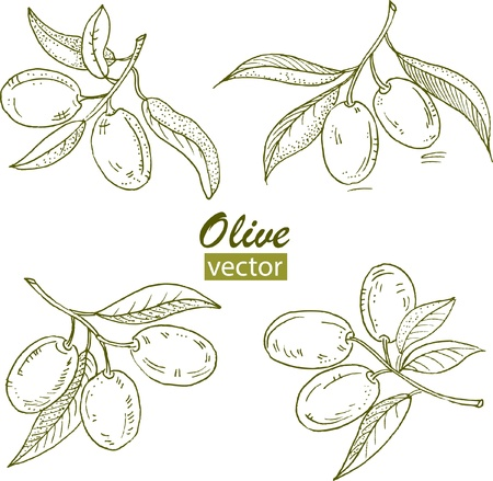 pitted: Illustration - isolated set of olives