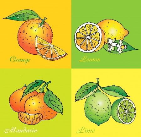Citrus vector set from orange, lemon, lime, mandarin Vector