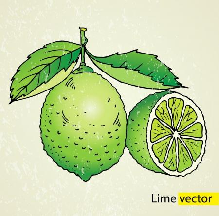 acid colors: Vector illustration lime green Illustration
