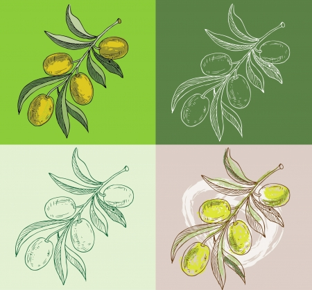 old fashioned vegetables: olive branches