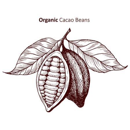 Cacaobonen - Vectorillustratie Vector Illustratie