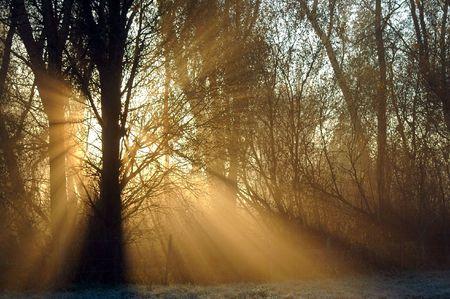 sunrays shine through forest