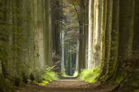 path through row of trees